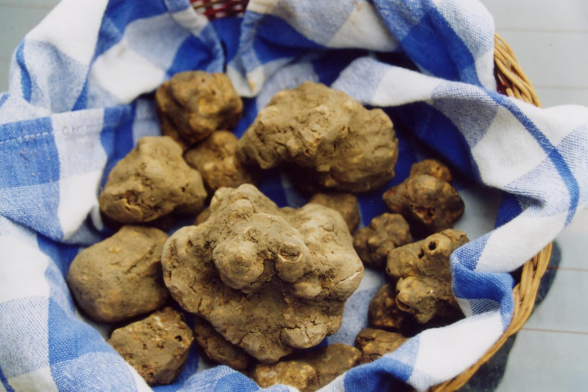 International Alba White Truffle Fair
